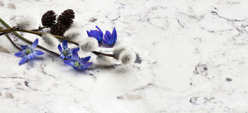 Spring blue wild flowers Scilla, willow and adler branches on De. Lta White quartz kitchen worktop Stock Photo