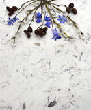 Spring blue wild flowers Scilla, willow and adler branches on De Royalty Free Stock Photo