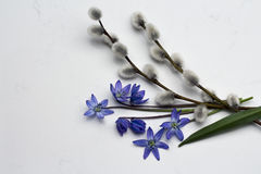 Spring blue wild flowers Scilla, willow branches on Noble Carrar Stock Photos