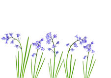 Spring Bluebells Stock Photography