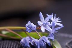 Spring bluebells Stock Photos