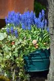 Spring bluebells in flowerpot Stock Image