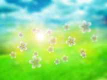 Spring blur background Royalty Free Stock Photography