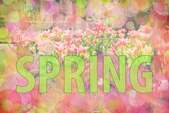 Spring blur background Royalty Free Stock Images