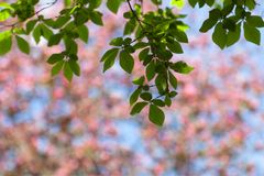 Spring blur bokeh background with green branches Royalty Free Stock Photography