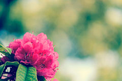 Spring blurred background with bokeh and closeup of purple flowers. Royalty Free Stock Image