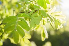 Spring blurred background with soft focus with sun-drenched gree Stock Images