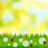 Spring blurred pattern with grass and chamomile Royalty Free Stock Photo