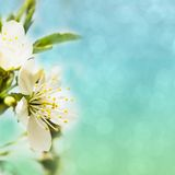 Spring bokeh Royalty Free Stock Photography