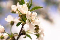 Spring bokeh Stock Photos