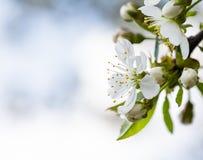 Spring bokeh Stock Images