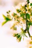 Spring bokeh Royalty Free Stock Photos