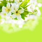 Spring bokeh Royalty Free Stock Image