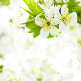 Spring bokeh Royalty Free Stock Photos