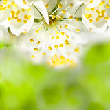 Spring bokeh Royalty Free Stock Images