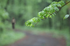 Spring bokeh. This mostly out-of-focus shot made near Vladivostok (Russia Royalty Free Stock Photos