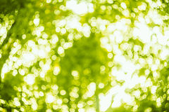 Spring bokeh background Royalty Free Stock Image
