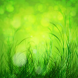 Spring bokeh background Stock Photo