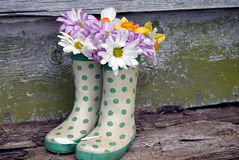 Daisies in polka dot boots Stock Image
