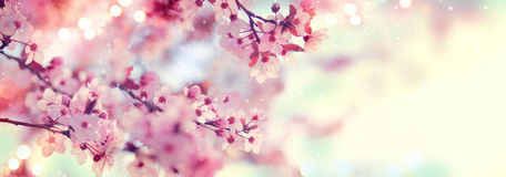 Spring border or background art with pink blossom. Beautiful nature scene with blooming tree and sun flare Royalty Free Stock Photos