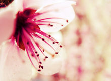 Spring border background Royalty Free Stock Images