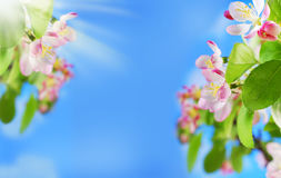 Spring border background with blooming flowers on tree branch Royalty Free Stock Images