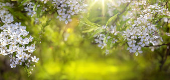 Spring border background with blossom royalty free stock photo