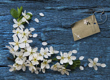 Spring border background Royalty Free Stock Photo