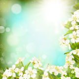 Spring border background. EPS 10 Stock Photos