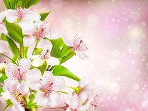 Spring border background. EPS 10 Royalty Free Stock Image