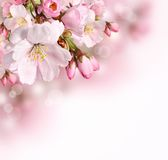 Spring border background with pink blossom. Spring border background with pink flowers royalty free stock image