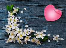 Spring border background Royalty Free Stock Photography
