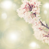 Spring border background with white blossom, colorised image with sun flare Stock Images