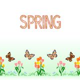 Spring border seamless background tulips with butterfly vector Illustration for use in interior design, artwork, dishes, clothing,. Packaging, greeting cards Stock Photo