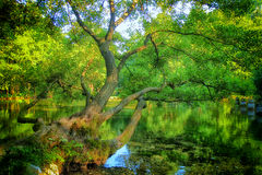 Spring of the Bosna River stock photography