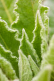 Spring botanical closeup background Royalty Free Stock Image
