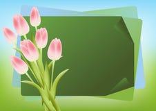 Spring  bouquet. Stock Photos