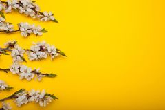 Spring bouquet of branches of a blossoming tree on a yellow background, minimalism. Copy space for text royalty free stock photography