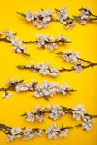 Spring bouquet of branches of a blossoming tree on a yellow background, minimalism stock image