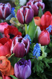 Spring bouquet in bright colors Royalty Free Stock Photography