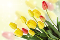 Spring bouquet card Royalty Free Stock Photography