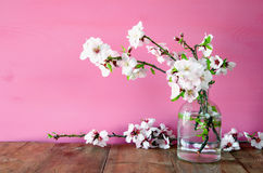 Spring bouquet of cherry tree branches Stock Image