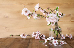 Spring bouquet of cherry tree branches Stock Photos
