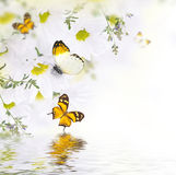 Spring bouquet of daisies and butterfly Stock Photos
