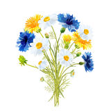 Spring bouquet of field flowers. For design Royalty Free Stock Image