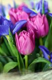 Spring bouquet. Flower tulip tulips iris bouquet bunch of flowers Stock Photography