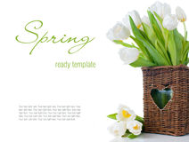 Tulips in a wicker basket Stock Photos