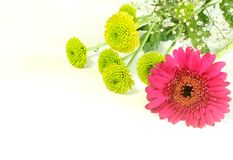 Spring bouquet with gerber isolated on white Royalty Free Stock Photo