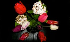 SPRING BOUQUET WITH LEATHER BACKGROUND. Tulips and Snowball blooms in an arrangement with a black background Royalty Free Stock Photography