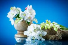 Spring bouquet of lily of the valley and apple blossom Royalty Free Stock Images